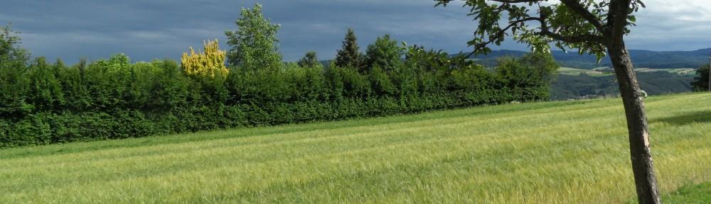 Buchbacher Wiese